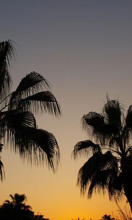 6598 télécharger le fond d'écran Paysage, Arbres, Coucher De Soleil, Palms - économiseurs d'écran et images gratuitement