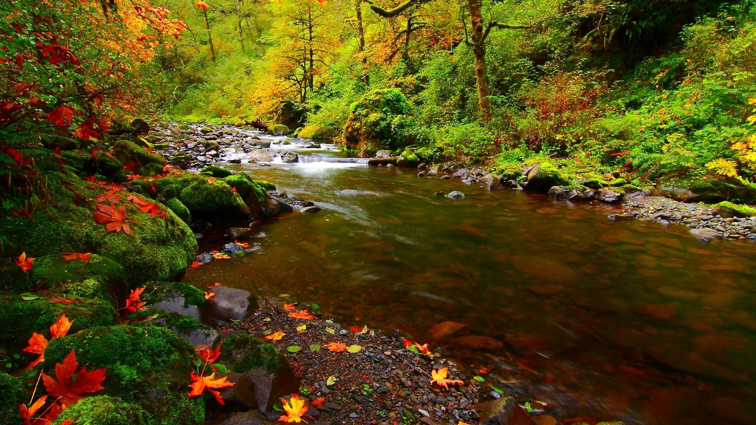 152390 завантажити шпалери Осінь, Листя, Природа, Річка, Камені - заставки і картинки безкоштовно