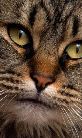 24982 скачать обои Животные, Кошки (Коты, Котики) - заставки и картинки бесплатно