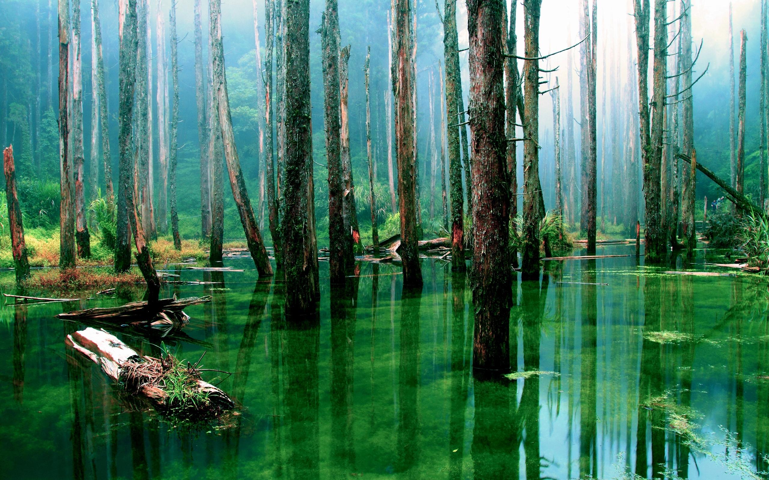 27901 скачать обои Пейзаж, Река, Деревья - заставки и картинки бесплатно