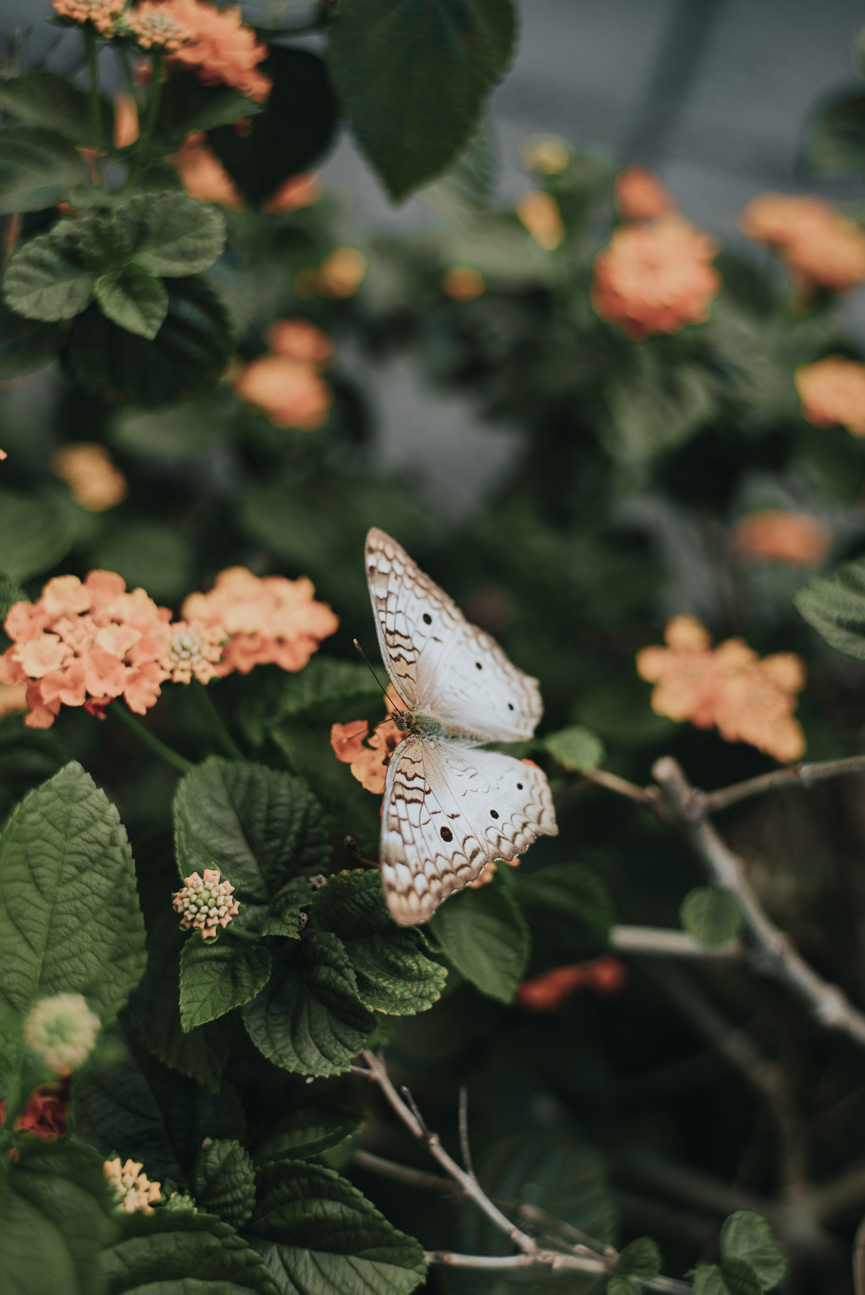 137461 Screensavers and Wallpapers Butterfly for phone. Download Flowers, Leaves, Butterfly, Spring pictures for free