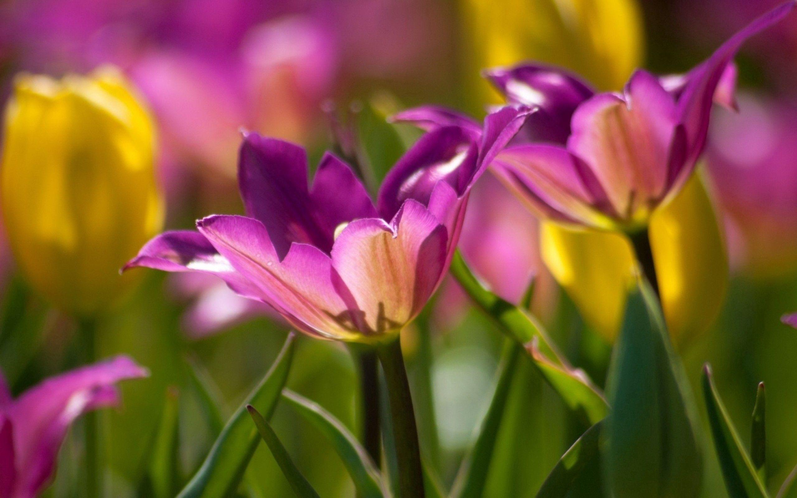 87352 скачать обои Цветы, Растение, Макро, Лепестки, Бутоны - заставки и картинки бесплатно