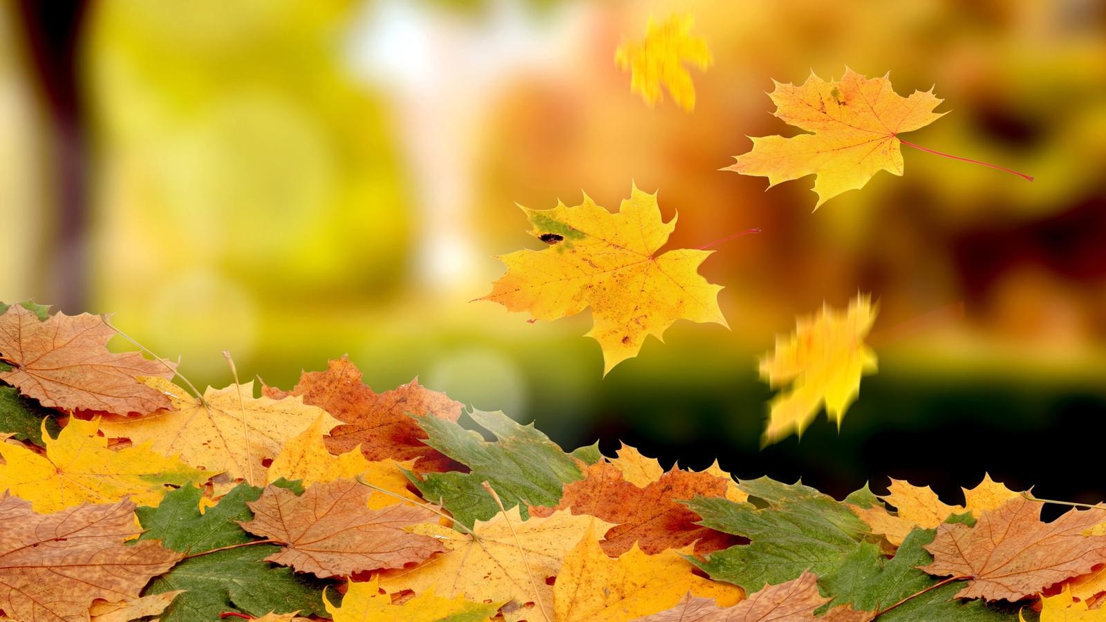 20650 скачать обои Растения, Осень, Листья - заставки и картинки бесплатно