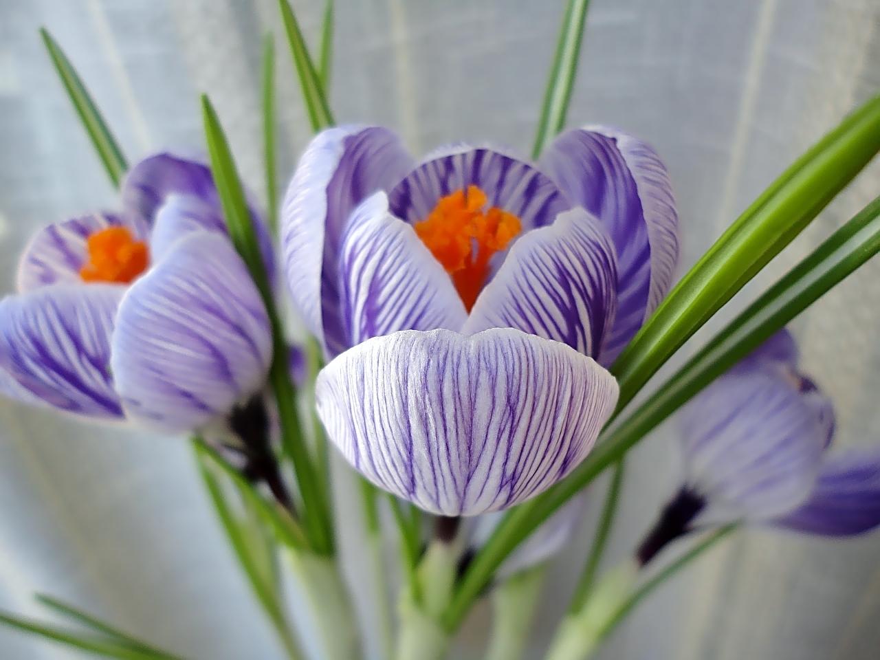 26089 скачать обои Растения, Цветы - заставки и картинки бесплатно