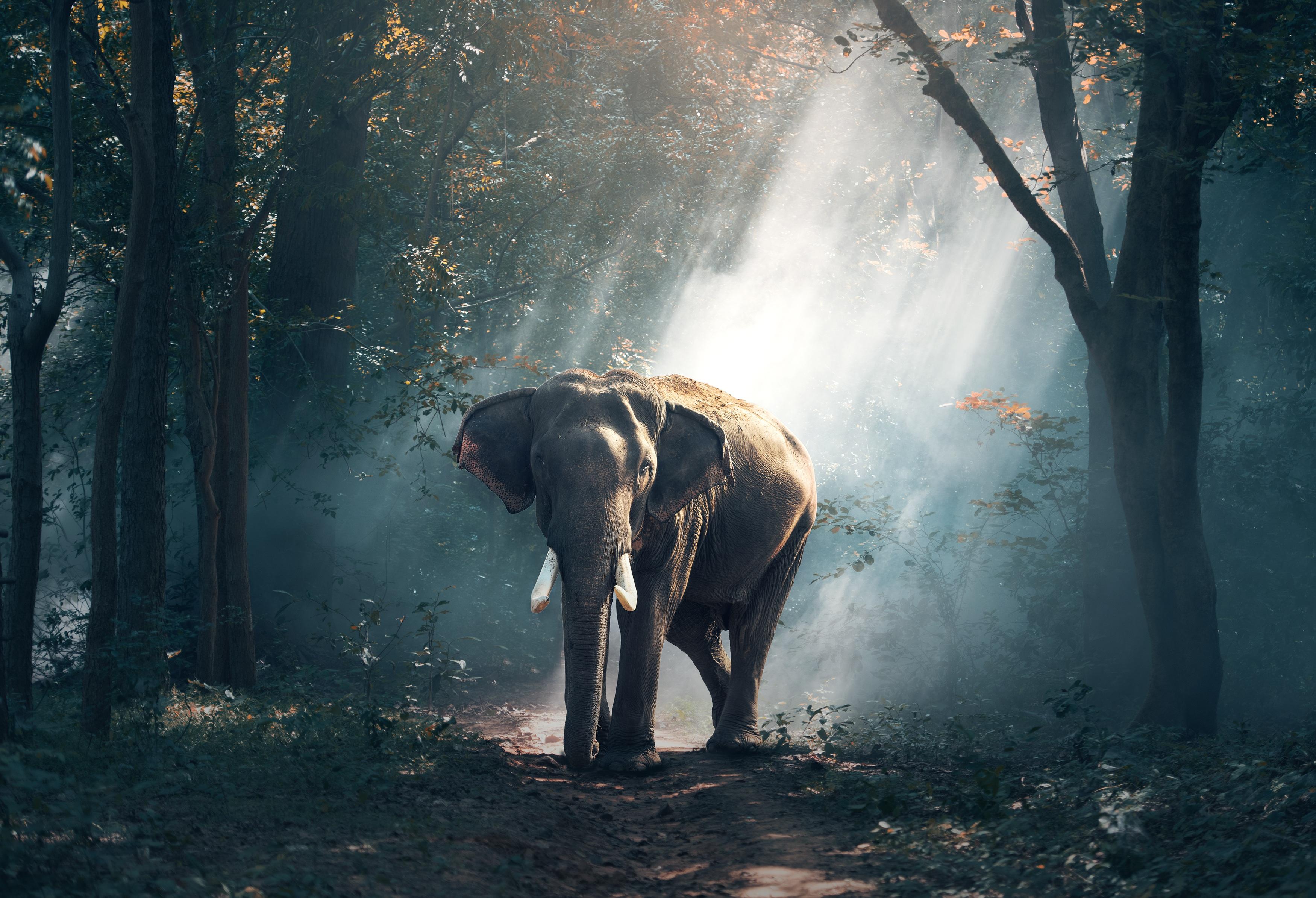 109832 télécharger le fond d'écran Animaux, Arbres, Forêt, Ombre, Lumière Du Soleil, L'éléphant, Éléphant - économiseurs d'écran et images gratuitement