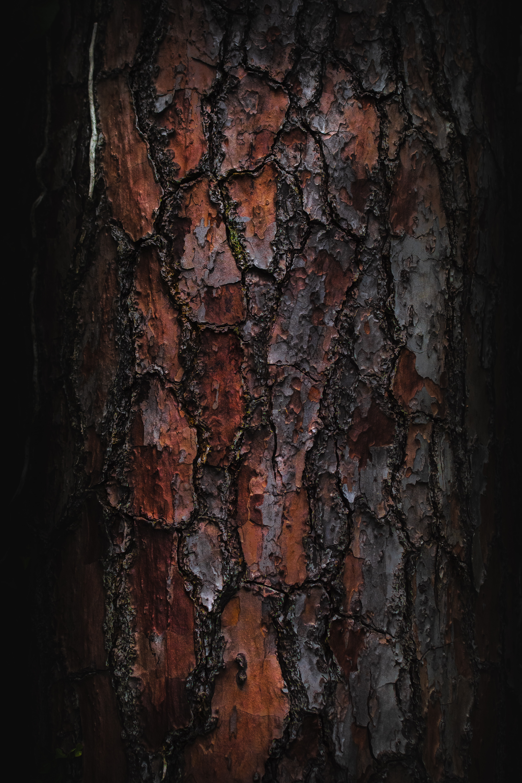 117825 Protetores de tela e papéis de parede Texturas em seu telefone. Baixe Texturas, Macro, Madeira, De Madeira, Árvore, Textura, Latido, Casca fotos gratuitamente