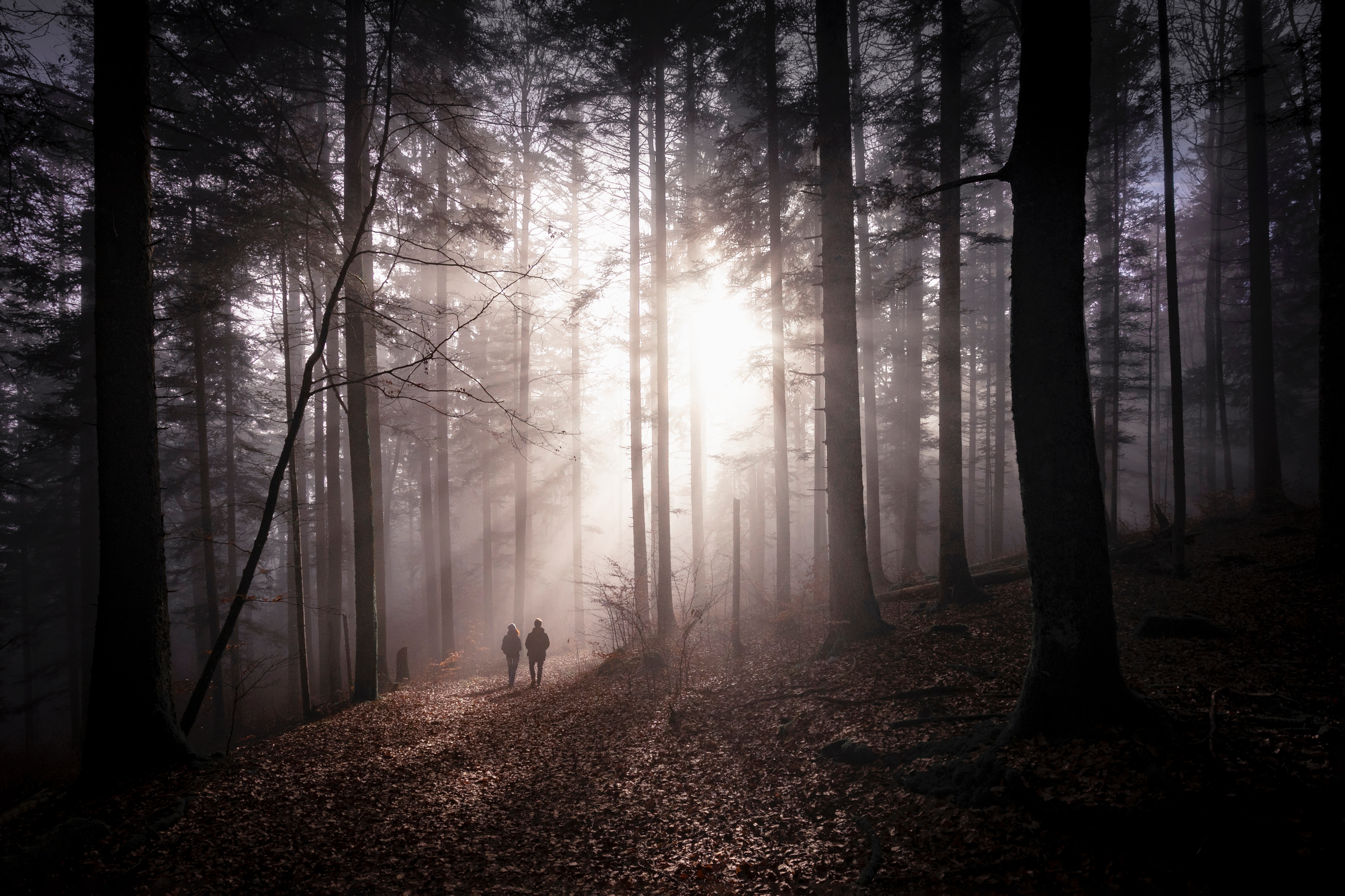 156460 download wallpaper Nature, Forest, Fog, Silhouettes, Stroll, Autumn, Couple, Pair screensavers and pictures for free
