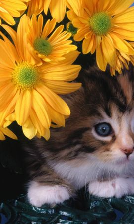 8221 download wallpaper Animals, Cats, Flowers screensavers and pictures for free