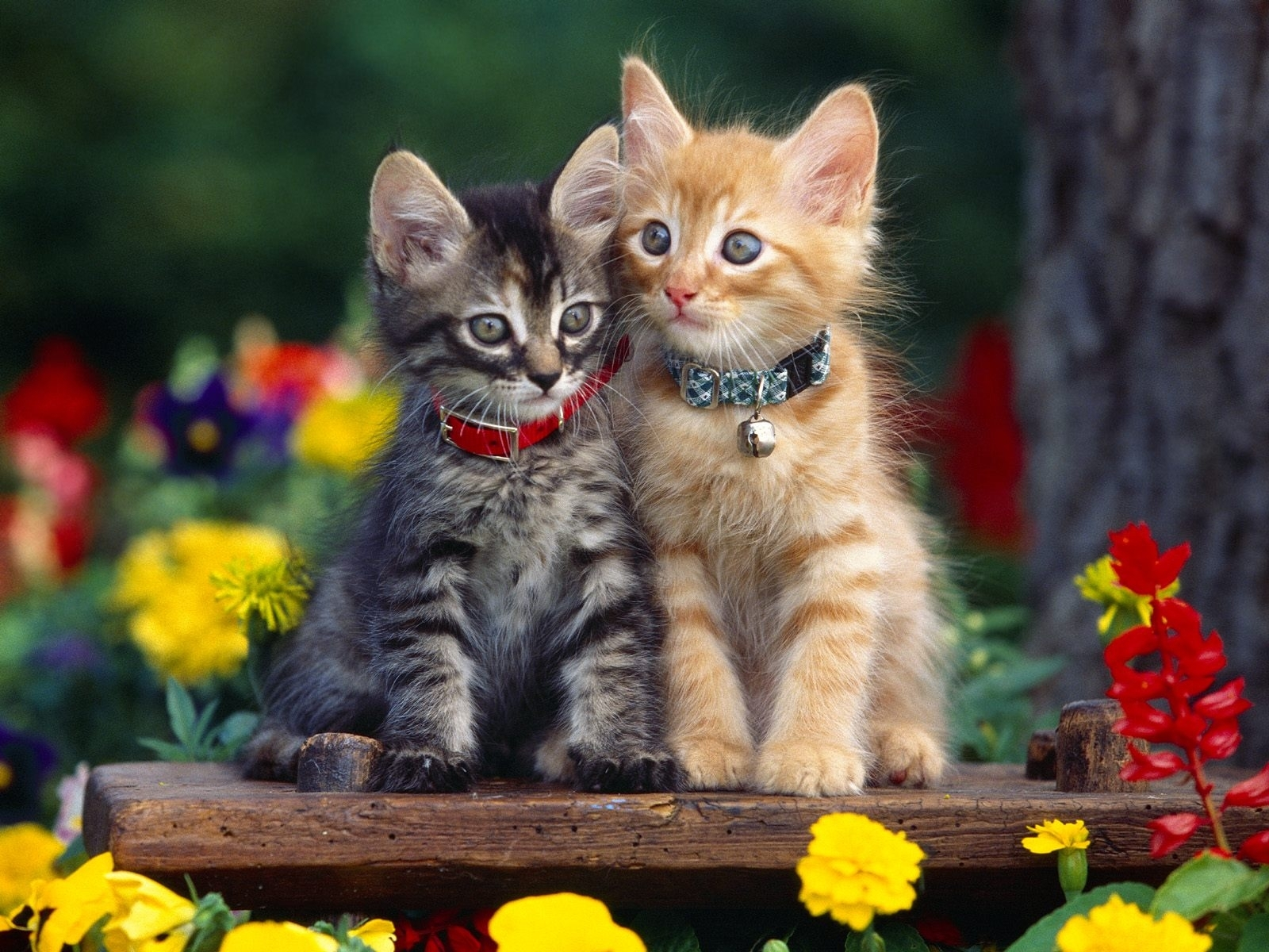 2229 download wallpaper Cats, Animals screensavers and pictures for free