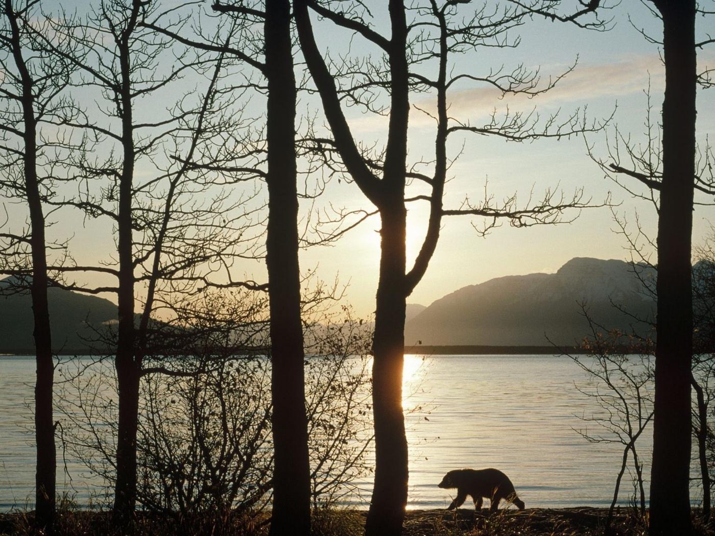 27908 скачать обои Животные, Пейзаж, Река, Деревья, Медведи - заставки и картинки бесплатно