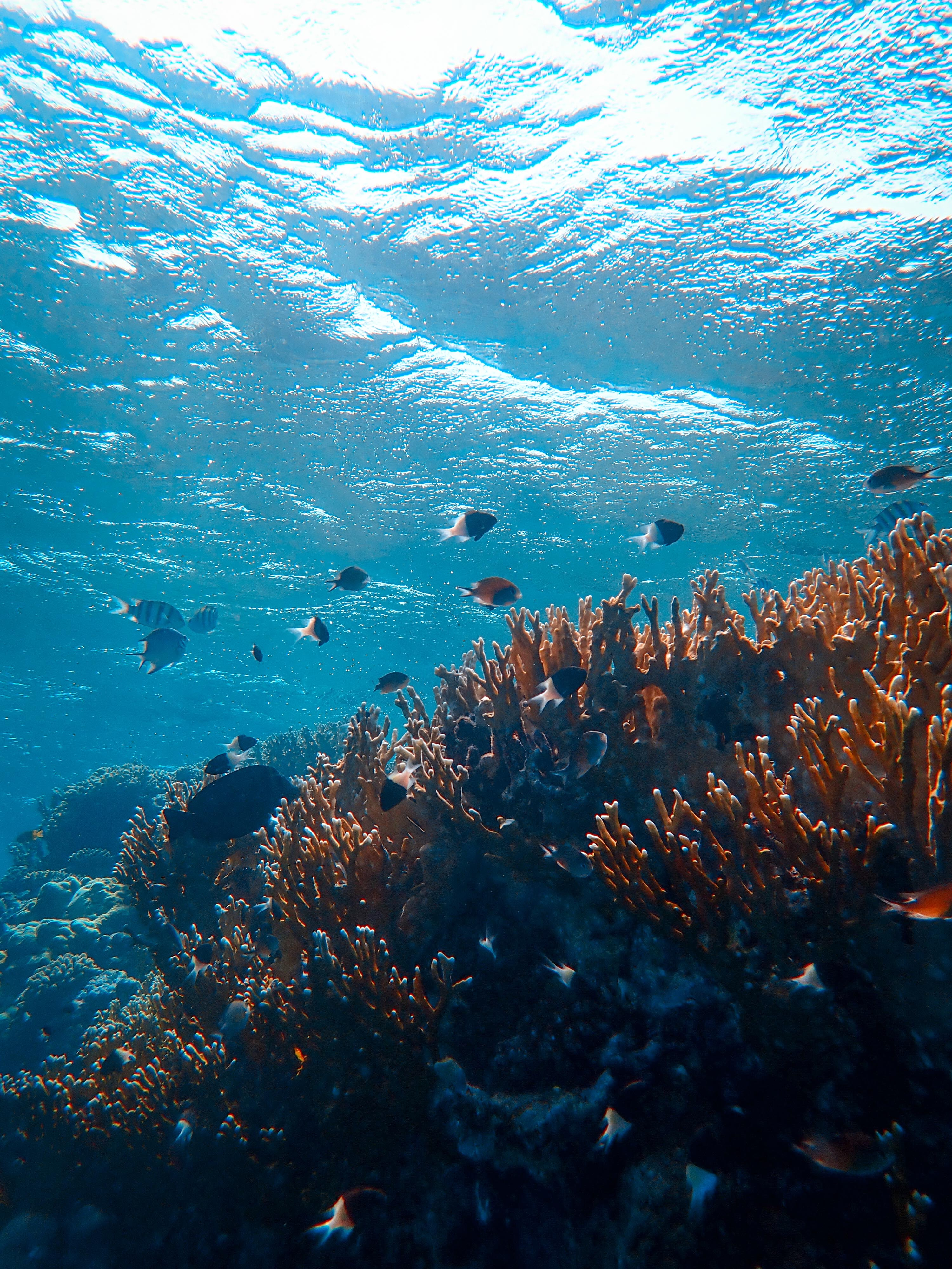 62620 download wallpaper Nature, Underwater World, Ocean, Seaweed, Algae, Fishes, Coral screensavers and pictures for free