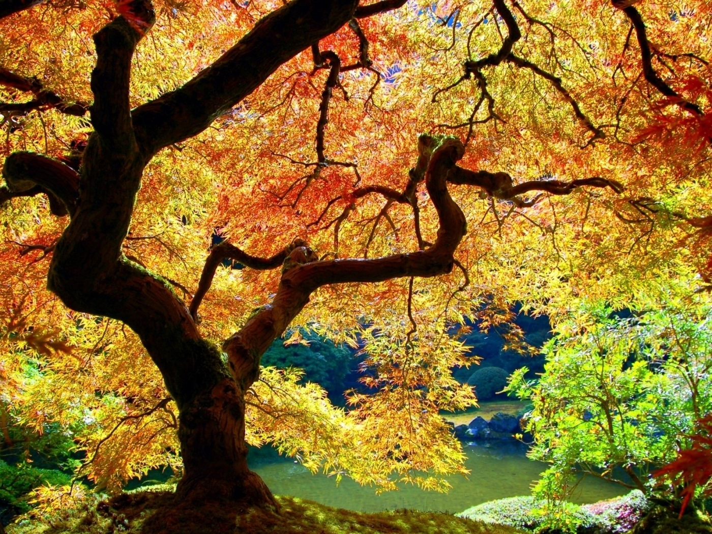 30021 download wallpaper Landscape, Trees, Autumn screensavers and pictures for free