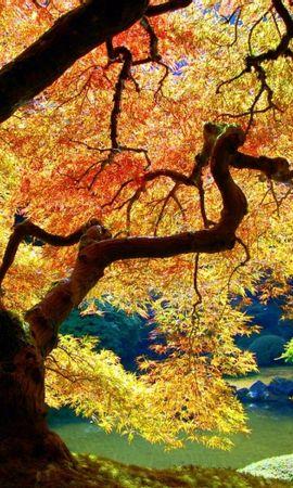 30021 скачать обои Пейзаж, Деревья, Осень - заставки и картинки бесплатно