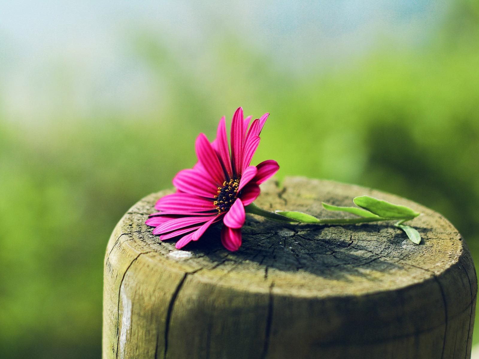 21758 скачать обои Растения, Цветы - заставки и картинки бесплатно