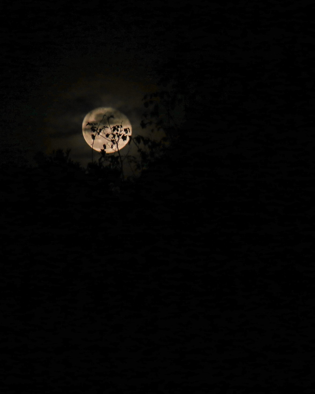 117550 обои 720x1280 на телефон бесплатно, скачать картинки Ночь, Облака, Луна, Черный, Ветки 720x1280 на мобильный
