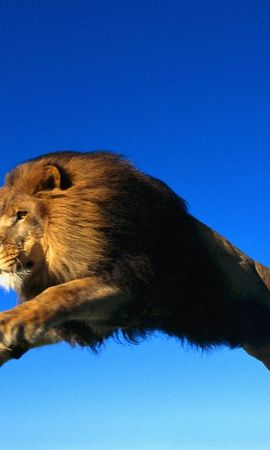 6440 download wallpaper Animals, Lions screensavers and pictures for free