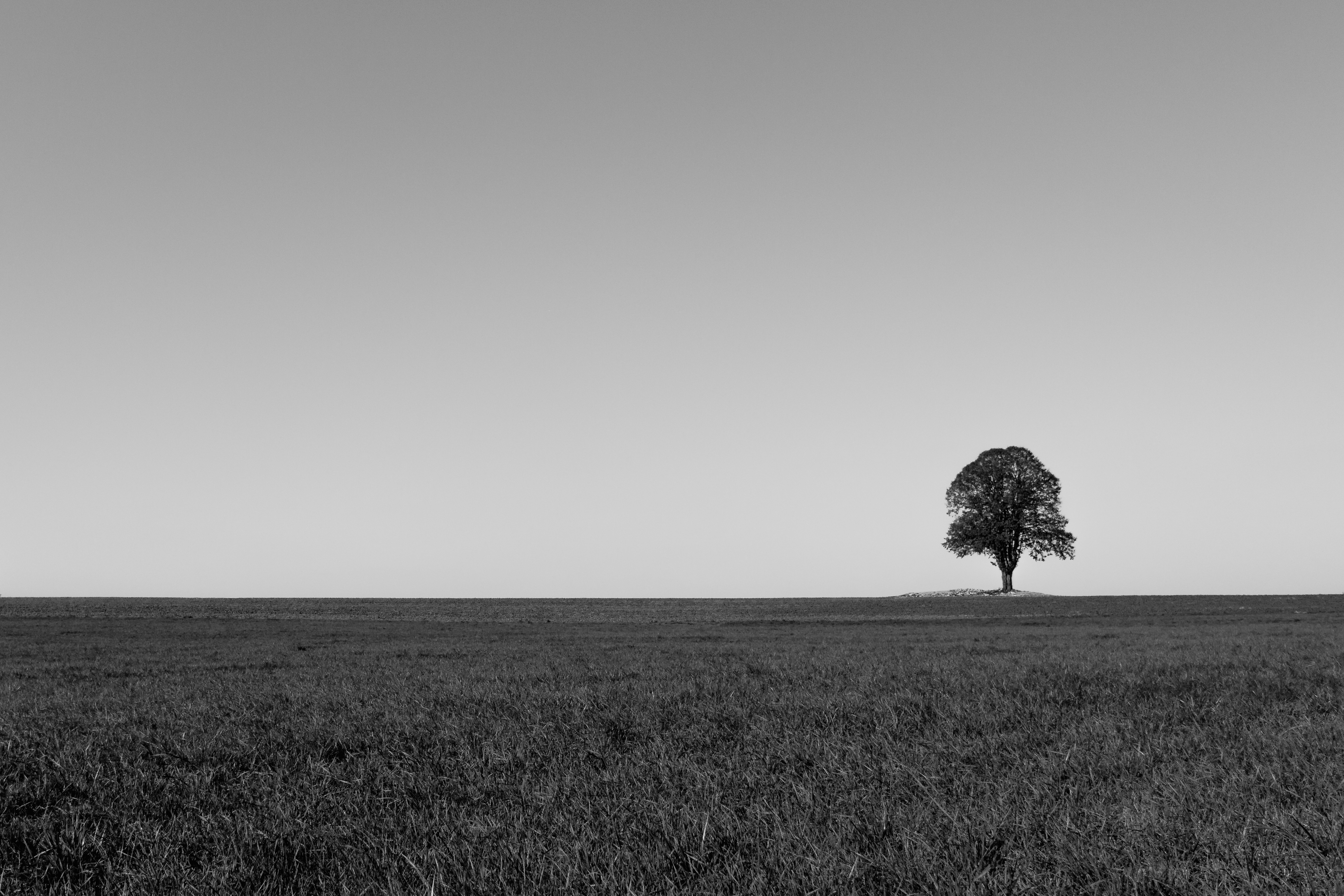 111877 download wallpaper Minimalism, Horizon, Wood, Tree, Field, Bw, Chb screensavers and pictures for free