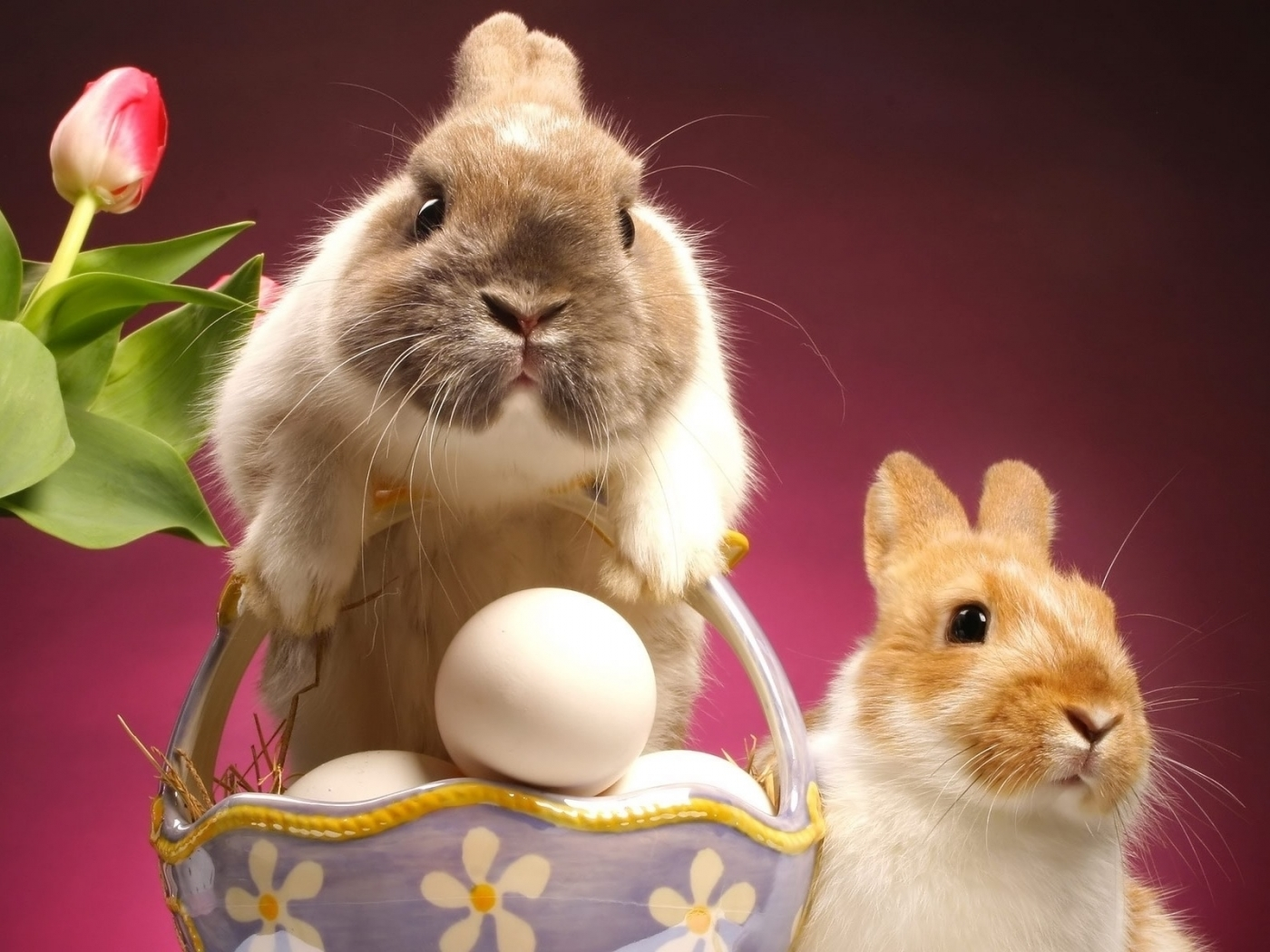 43392 Screensavers and Wallpapers Rabbits for phone. Download Animals, Holidays, Easter, Rabbits pictures for free