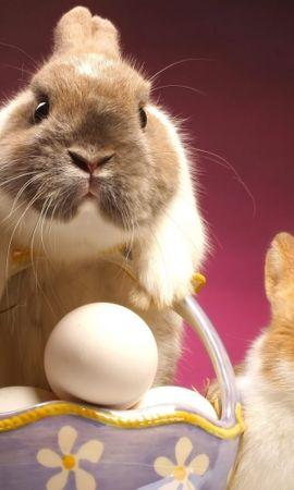 43392 скачать обои Праздники, Животные, Пасха, Кролики - заставки и картинки бесплатно