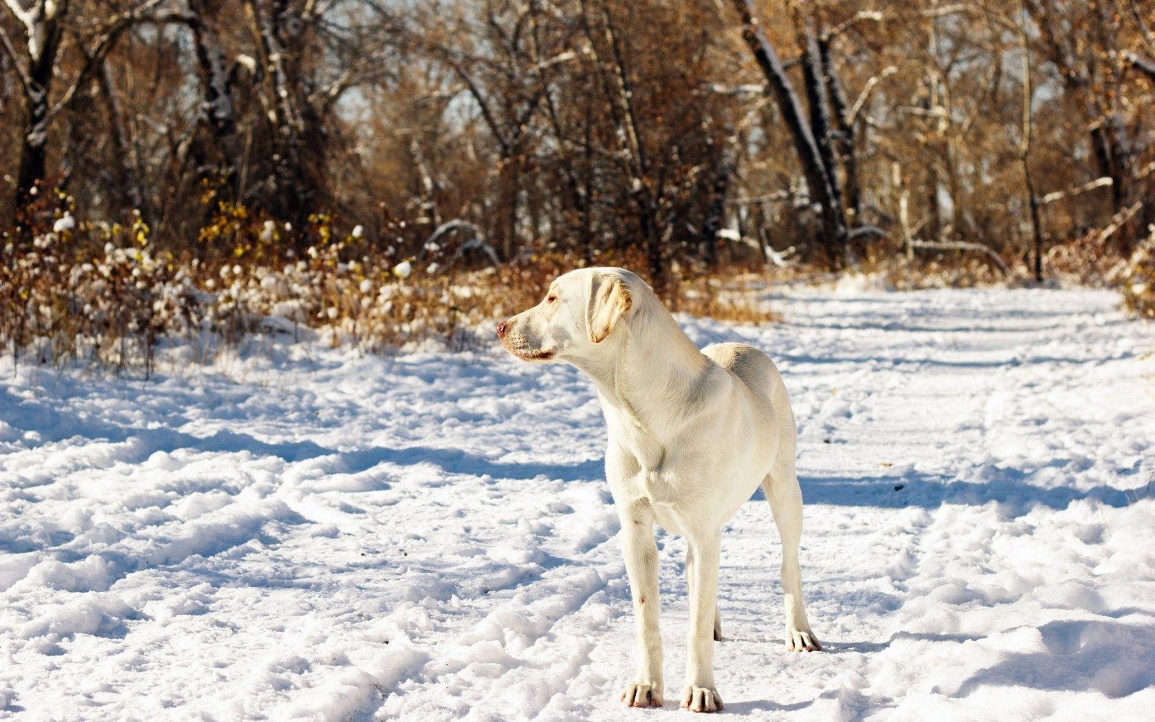 150619 скачать обои Животные, Собака, Друг, Снег, Осень - заставки и картинки бесплатно