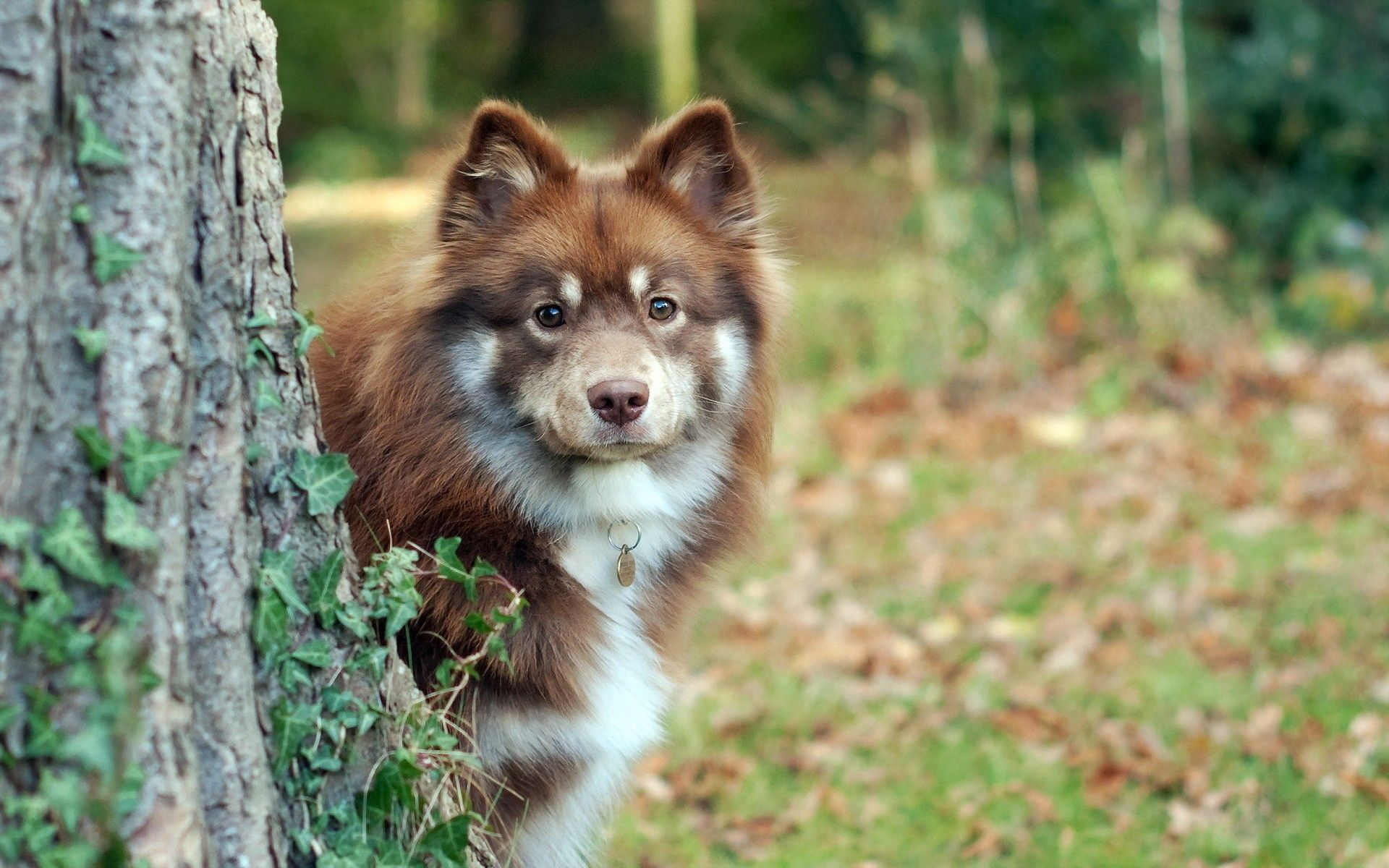 108350 download wallpaper Animals, Dog, Wood, Tree, Grass, Peek Out, Look Out screensavers and pictures for free