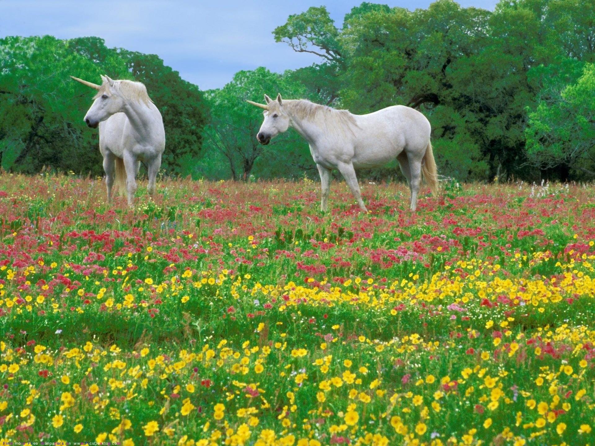 98042 Protetores de tela e papéis de parede Cavalos em seu telefone. Baixe Animais, Flores, Grama, Cavalos, Campo fotos gratuitamente