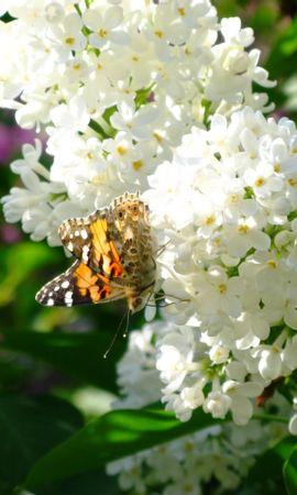 29784 Salvapantallas y fondos de pantalla Insectos en tu teléfono. Descarga imágenes de Mariposas, Insectos gratis