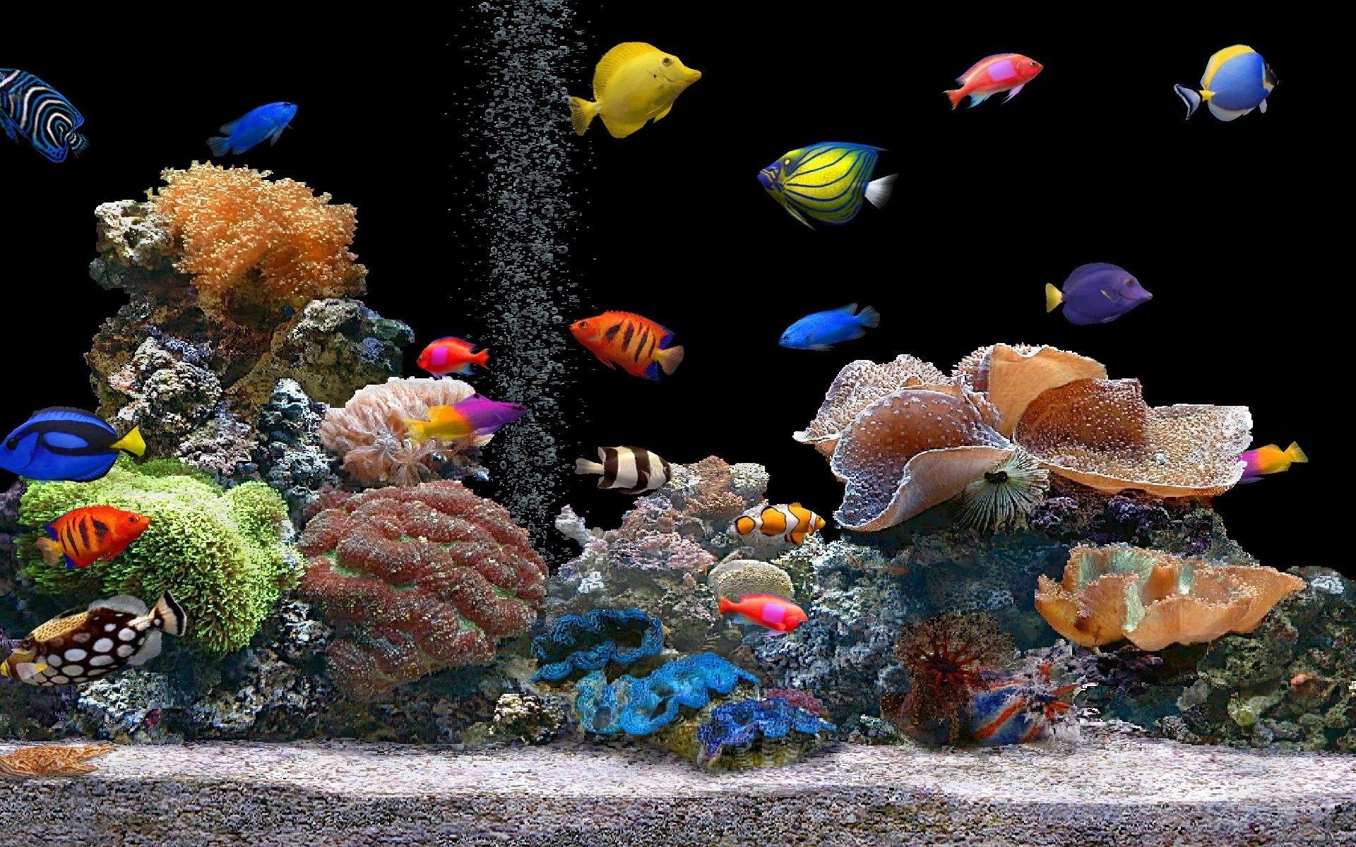52634 Заставки и Обои Рыбы на телефон. Скачать Подводный Мир, Кораллы, Рыбы, Животные, Разноцветный картинки бесплатно