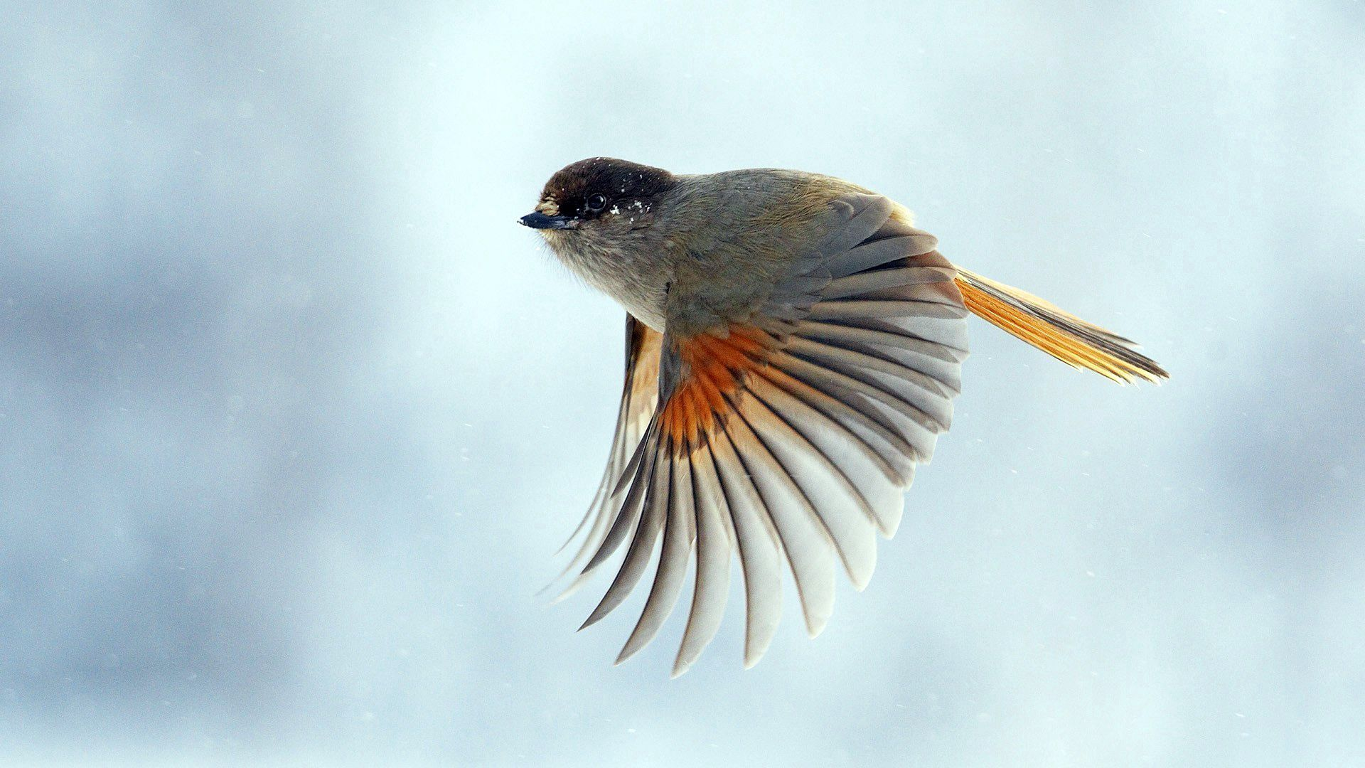 89664 Screensavers and Wallpapers Wings for phone. Download Animals, Bird, Flight, Wings, Wave, Sweep pictures for free