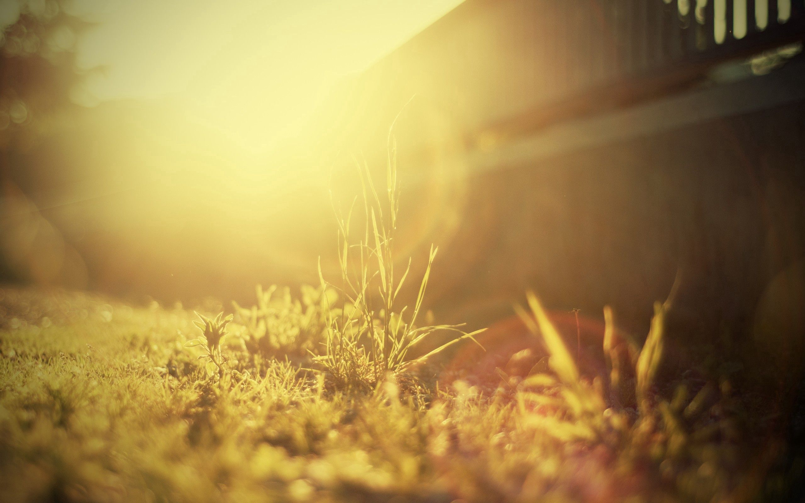 75546 Screensavers and Wallpapers Bright for phone. Download Grass, Macro, Shine, Light, Bright, Sunny, Solar pictures for free