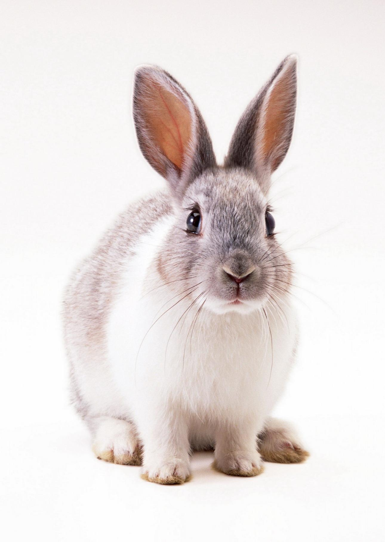 10761 Screensavers and Wallpapers Rabbits for phone. Download Animals, Rodents, Rabbits pictures for free