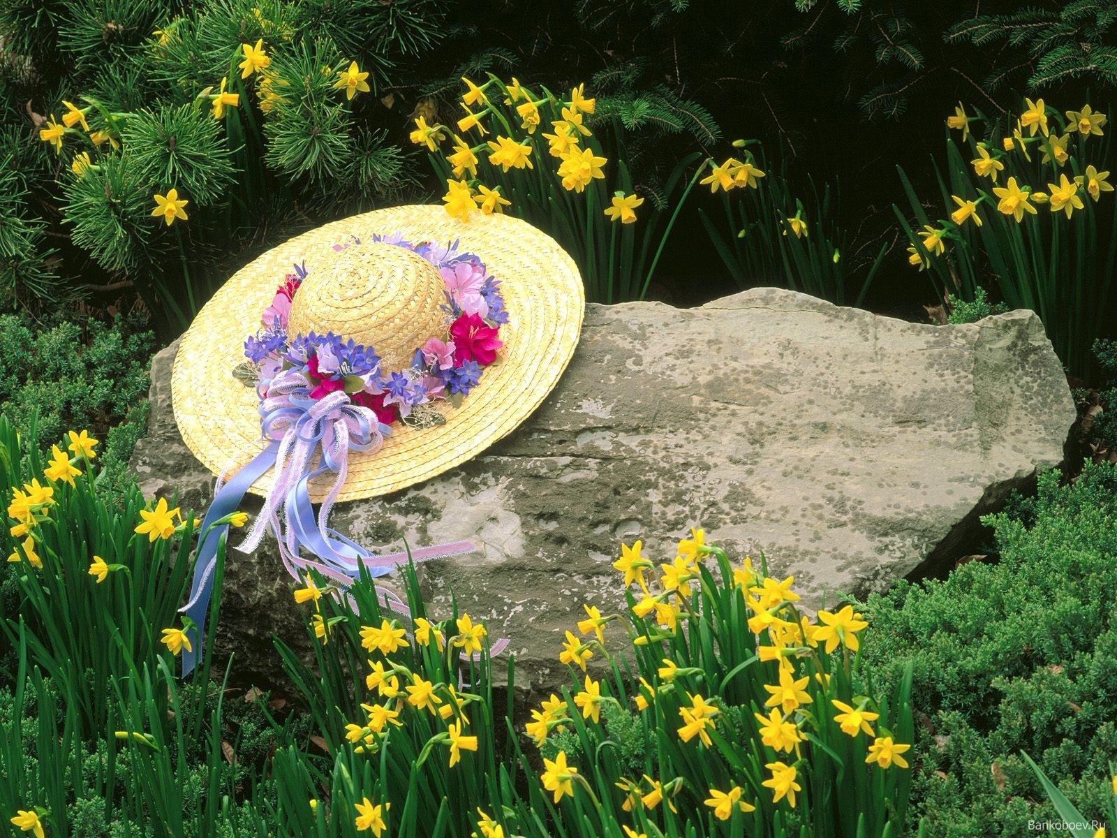 10658 descargar fondo de pantalla Plantas, Flores: protectores de pantalla e imágenes gratis