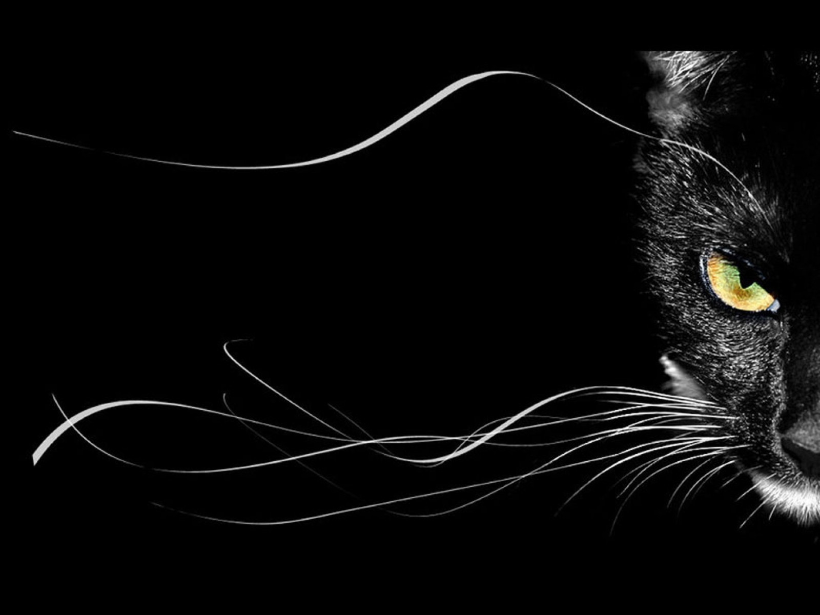 15340 download wallpaper Animals, Cats screensavers and pictures for free