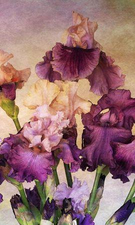 154106 baixar papel de parede Flores, Íris, Ramalhete, Buquê, Fundo - protetores de tela e imagens gratuitamente
