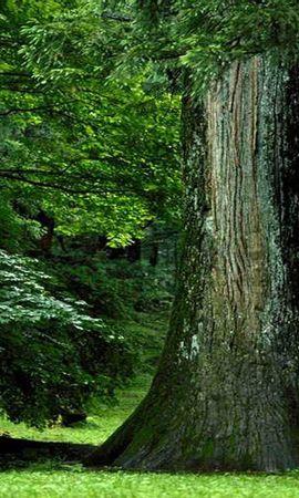 26348 скачать обои Растения, Пейзаж, Деревья - заставки и картинки бесплатно