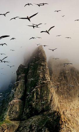 15338 скачать обои Пейзаж, Горы, Чайки - заставки и картинки бесплатно