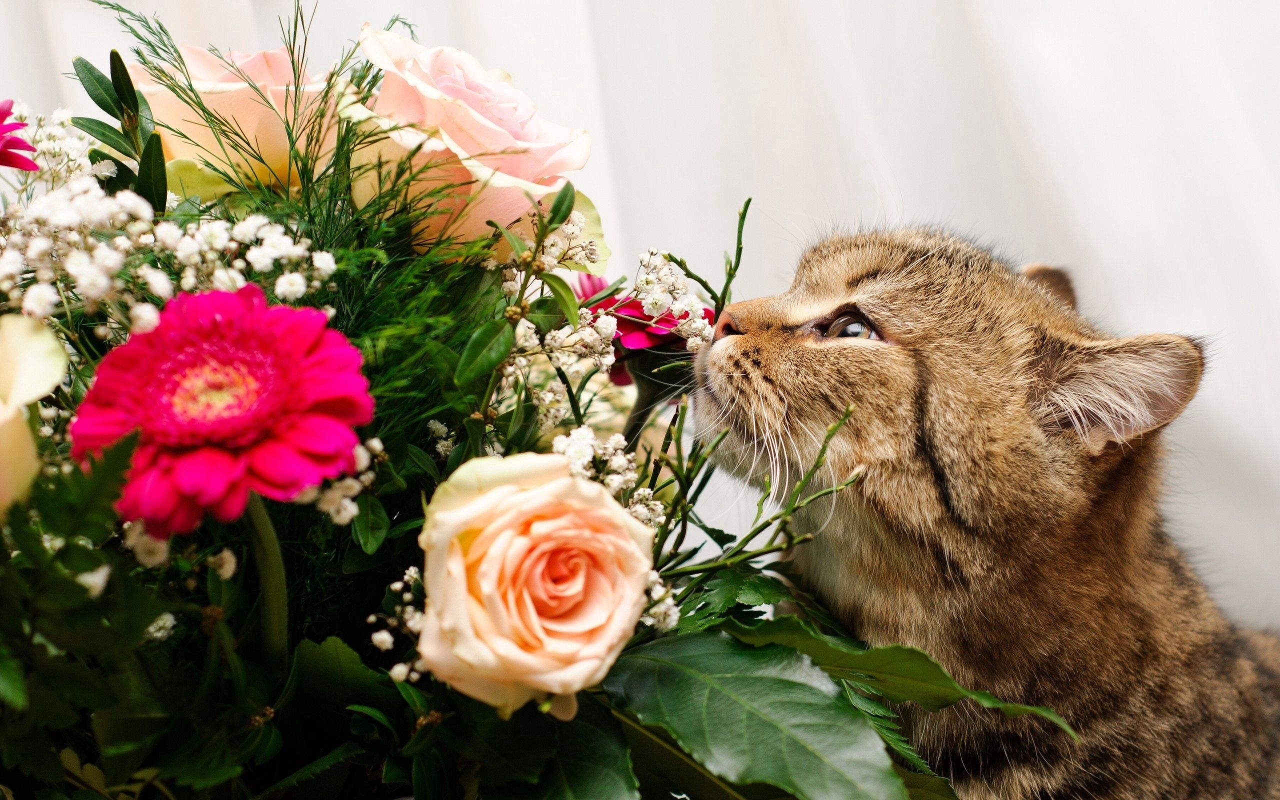 128203 download wallpaper Animals, Cat, Muzzle, Bouquet, To Sniff, Smell, Roses screensavers and pictures for free