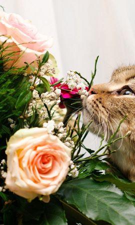 128203 завантажити шпалери Тварини, Кіт, Кішка, Морда, Букет, Нюхати, Запах, Рози - заставки і картинки безкоштовно