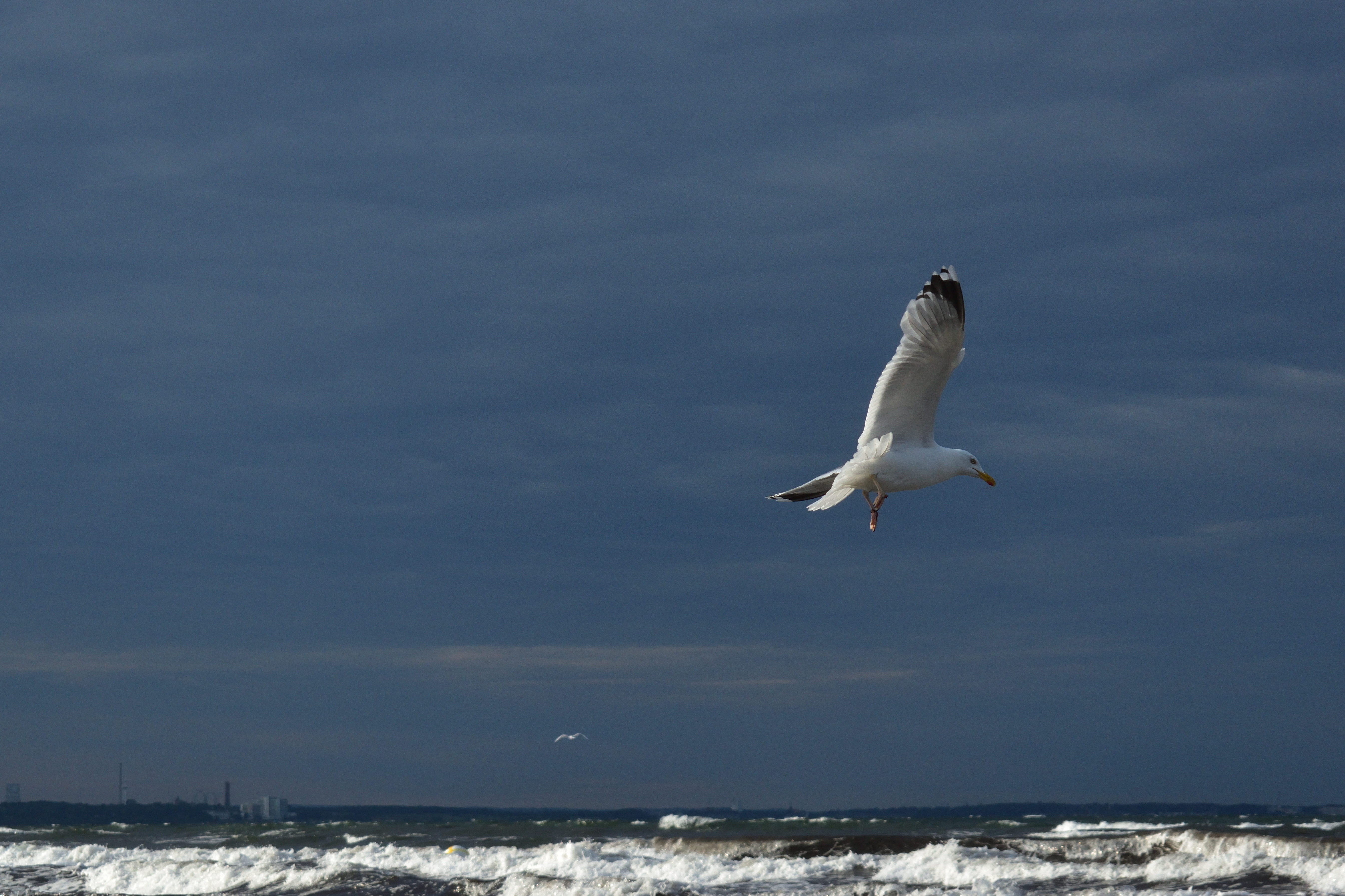 153967 download wallpaper Animals, Gull, Seagull, Bird, Wings, Flight, Waves screensavers and pictures for free