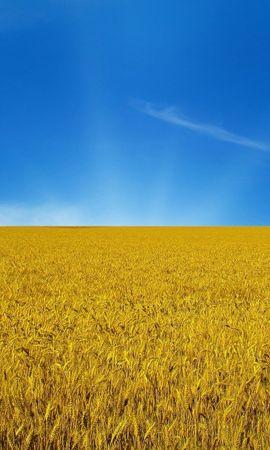 44071 скачать обои Пейзаж, Природа, Поля, Пшеница - заставки и картинки бесплатно