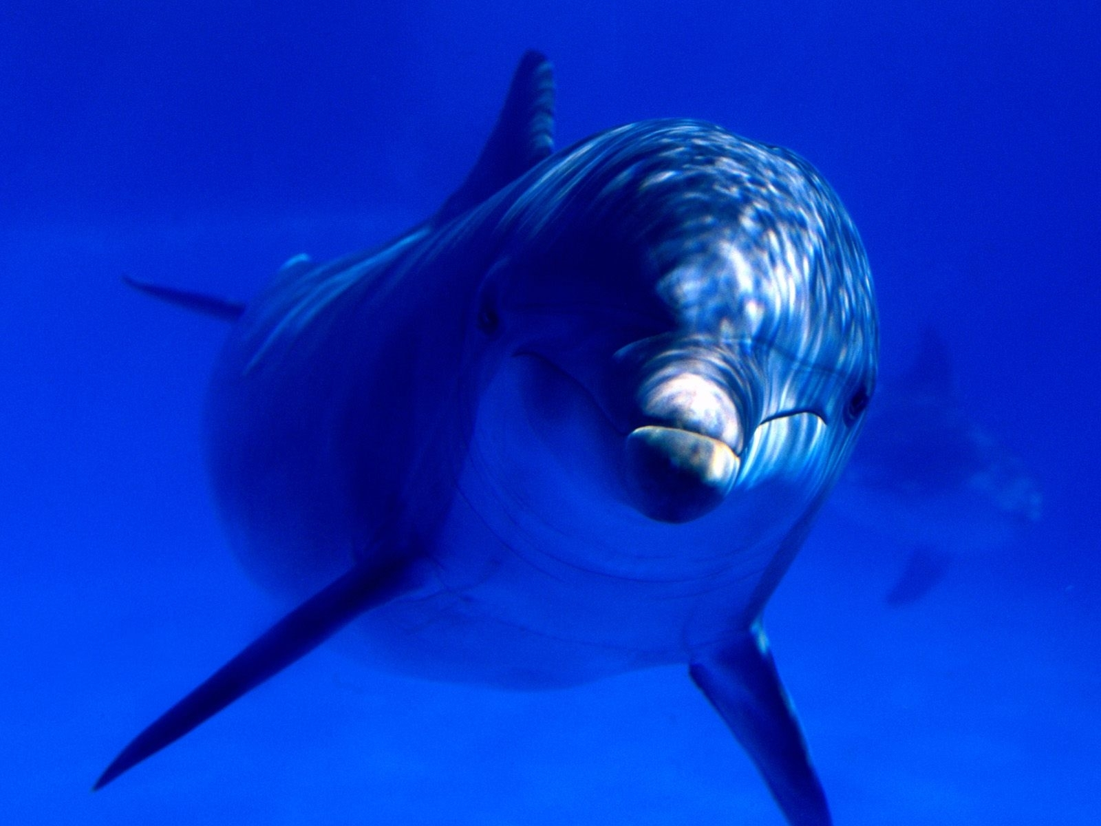 Handy-Wallpaper Delfine, Tiere kostenlos herunterladen.