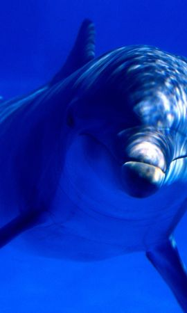 7264 download wallpaper Animals, Dolfins screensavers and pictures for free