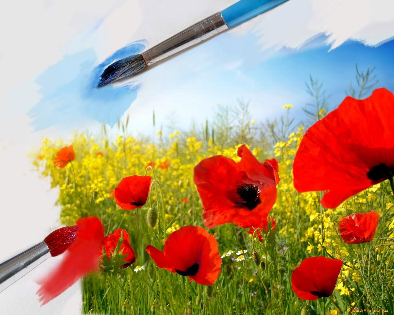 18134 скачать обои Растения, Цветы, Фон, Маки - заставки и картинки бесплатно