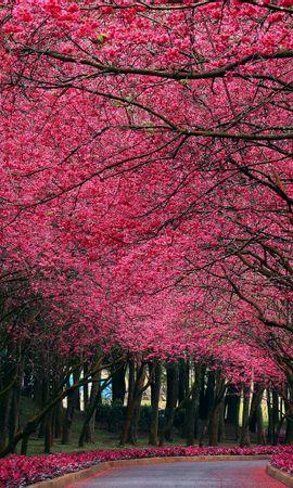 28069 скачать обои Пейзаж, Деревья, Улицы - заставки и картинки бесплатно