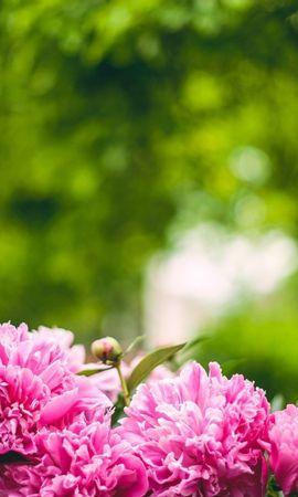 47089 descargar fondo de pantalla Plantas, Paisaje, Flores: protectores de pantalla e imágenes gratis