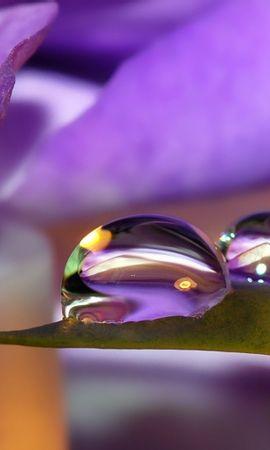 28342 скачать Фиолетовые обои на телефон бесплатно, Растения, Цветы, Фон, Капли Фиолетовые картинки и заставки на мобильный