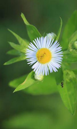 26455 скачать обои Растения, Цветы - заставки и картинки бесплатно