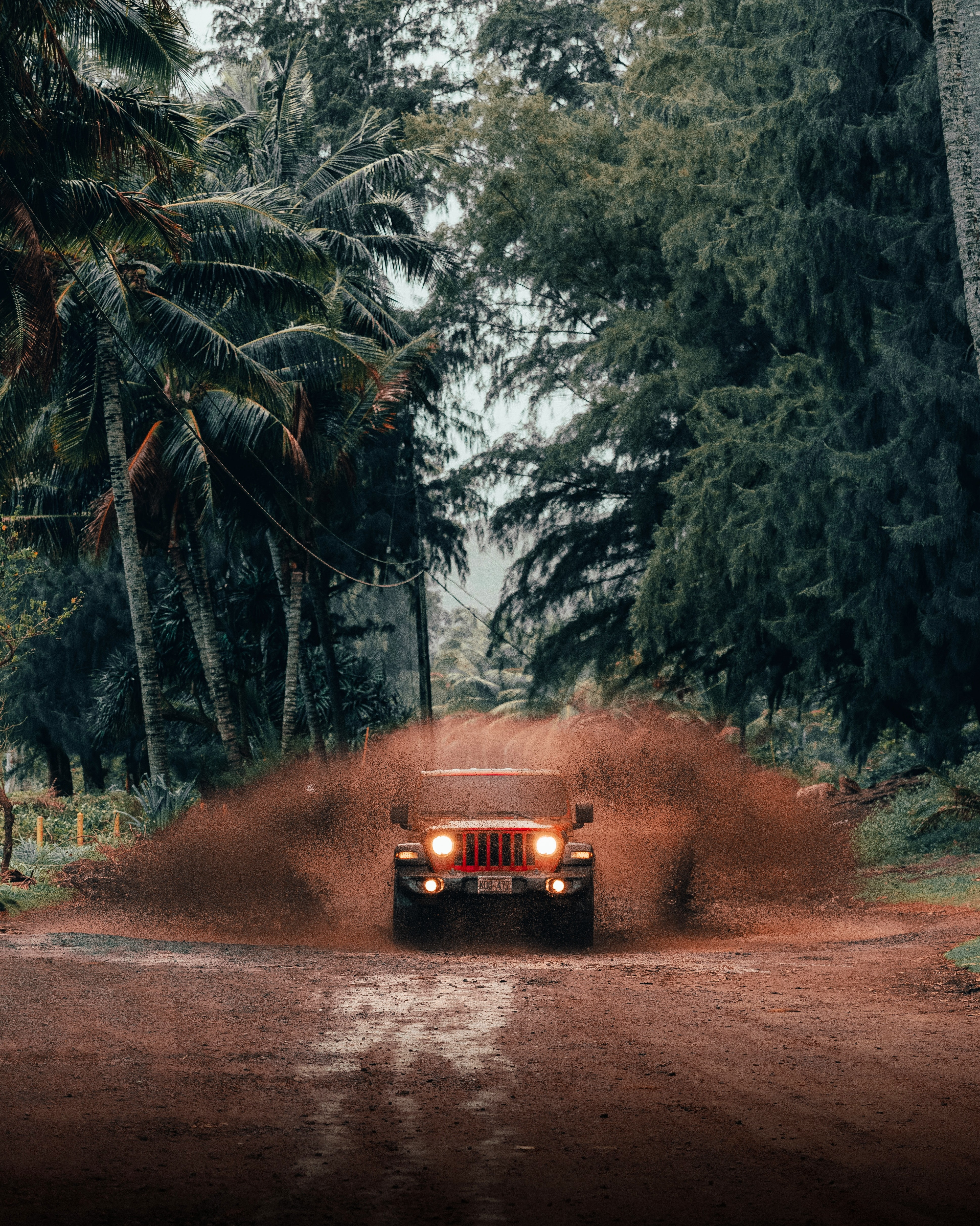 129505 download wallpaper Cars, Jeep Wrangler, Jeep, Car, Suv, Tropics screensavers and pictures for free