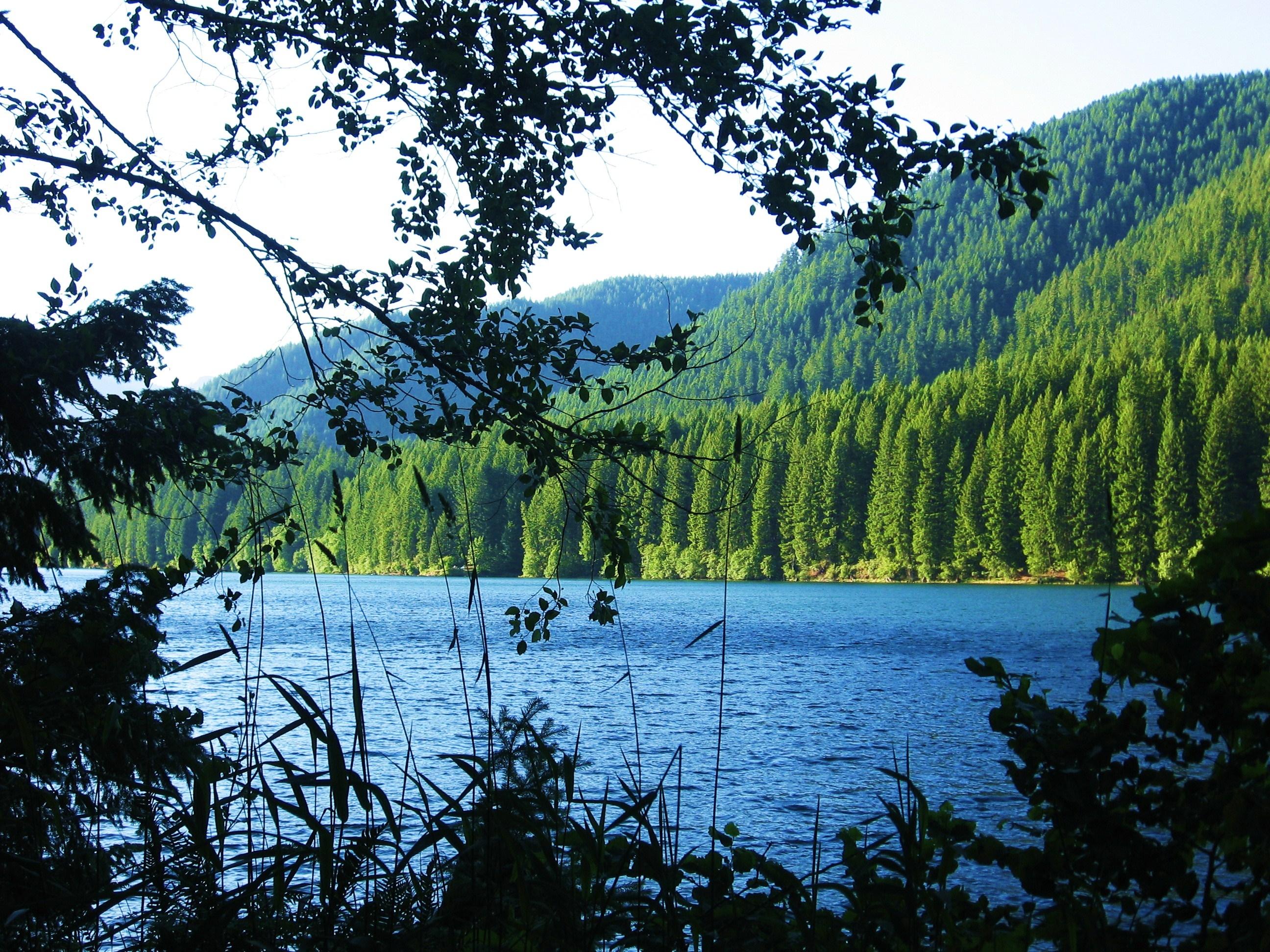 57573壁紙のダウンロード自然, 湖, 森林, 森, ブランチ, 枝, 山脈, 風景-スクリーンセーバーと写真を無料で