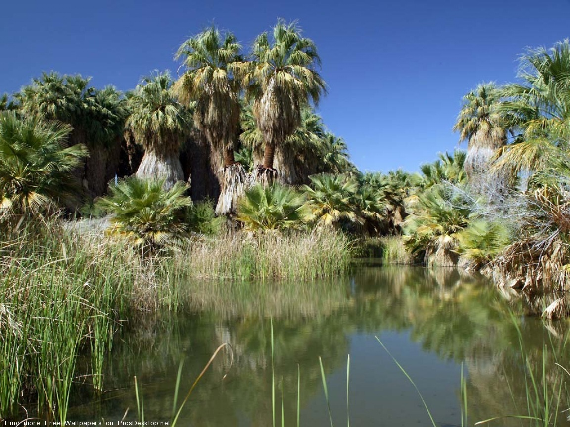 11231 скачать обои Пейзаж, Река, Деревья, Пальмы - заставки и картинки бесплатно